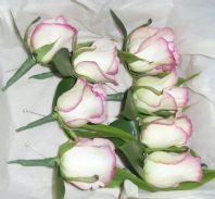 Cezanne Rose Buttonholes